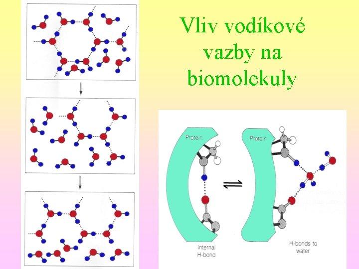 Vliv vodíkové vazby na biomolekuly
