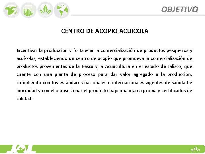 OBJETIVO CENTRO DE ACOPIO ACUICOLA Incentivar la producción y fortalecer la comercialización de productos