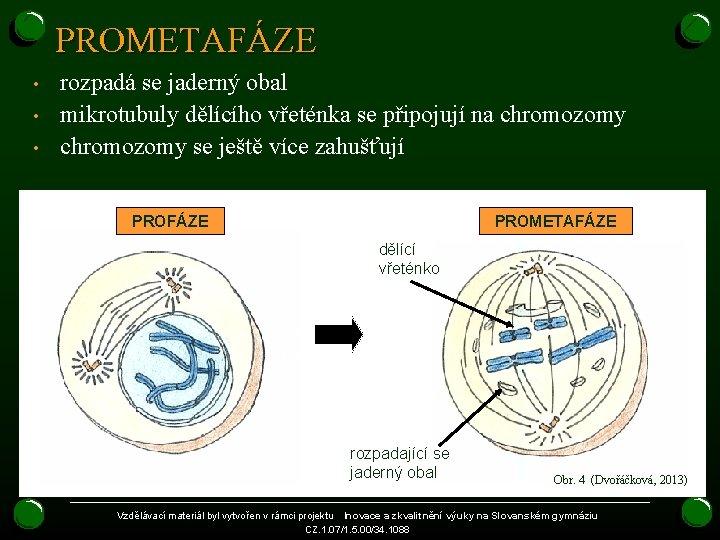 PROMETAFÁZE • • • rozpadá se jaderný obal mikrotubuly dělícího vřeténka se připojují na