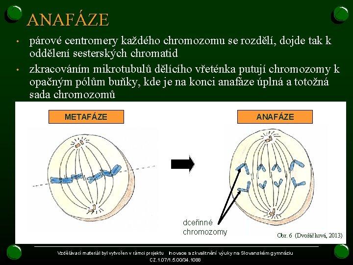 ANAFÁZE • • párové centromery každého chromozomu se rozdělí, dojde tak k oddělení sesterských