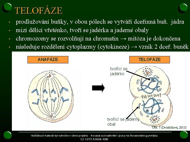 TELOFÁZE • • prodlužování buňky, v obou pólech se vytváří dceřinná buň. jádra mizí