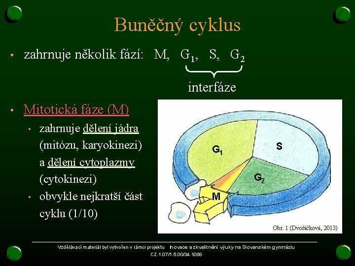 Buněčný cyklus • zahrnuje několik fází: M, G 1, S, G 2 interfáze •