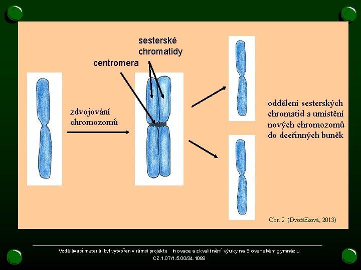 sesterské chromatidy centromera zdvojování chromozomů oddělení sesterských chromatid a umístění nových chromozomů do dceřinných
