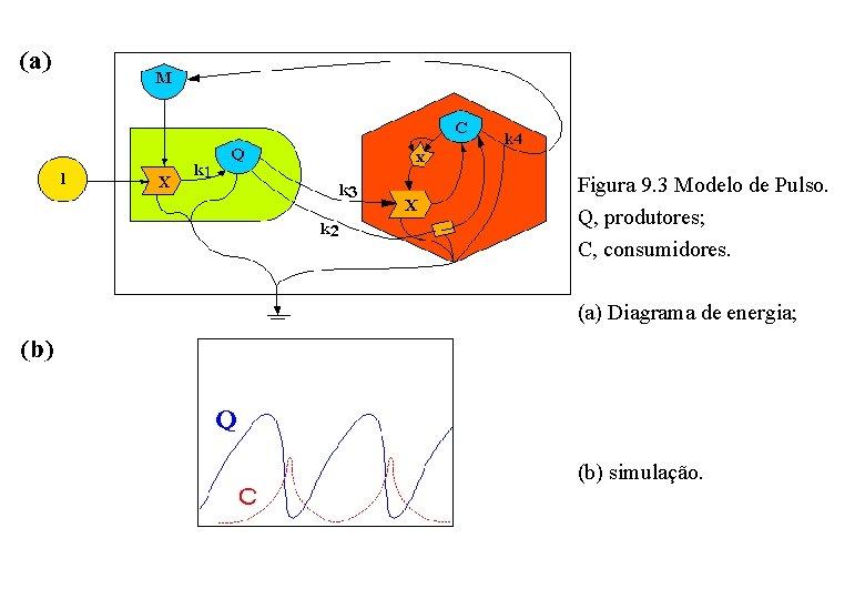 Figura 9. 3 Modelo de Pulso. Q, produtores; C, consumidores. (a) Diagrama de energia;