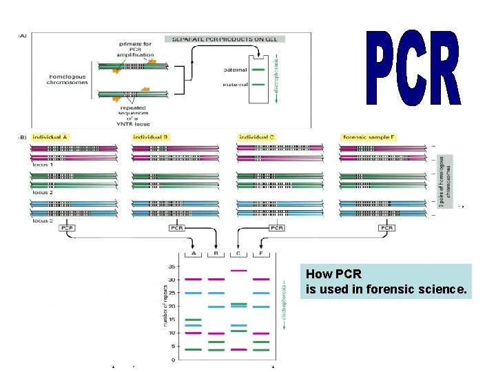 The DNA sequences that create the variability used in this analysis contain runs of