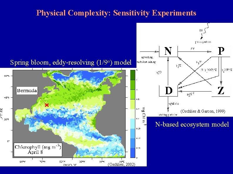 Physical Complexity: Sensitivity Experiments Spring bloom, eddy-resolving (1/9 o) model (Oschlies & Garcon, 1999)