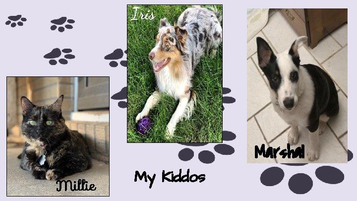 Iris Marshal Millie My Kiddos