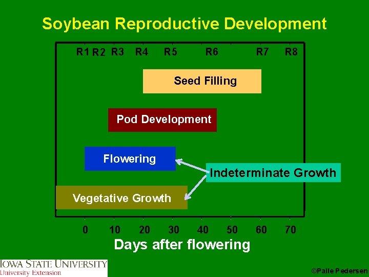 Soybean Reproductive Development R 1 R 2 R 3 R 4 R 5 R