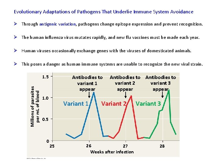 Evolutionary Adaptations of Pathogens That Underlie Immune System Avoidance Ø Through antigenic variation, pathogens