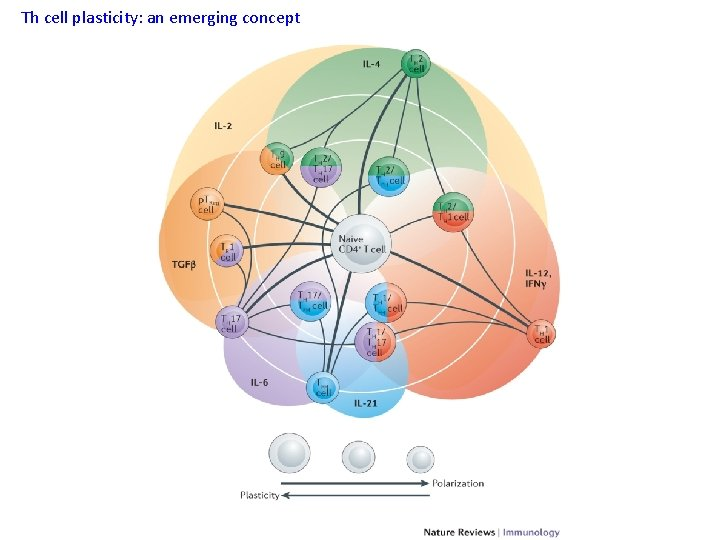 Th cell plasticity: an emerging concept