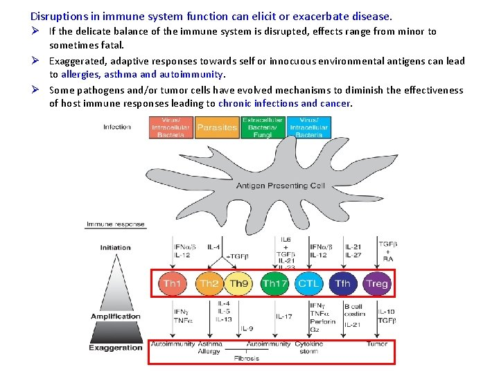 Disruptions in immune system function can elicit or exacerbate disease. Ø If the delicate