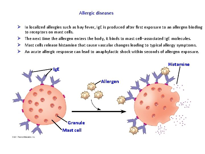 Allergic diseases Ø In localized allergies such as hay fever, Ig. E is produced