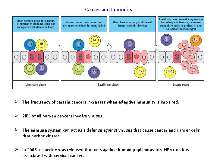 Cancer and Immunity Ø The frequency of certain cancers increases when adaptive immunity is