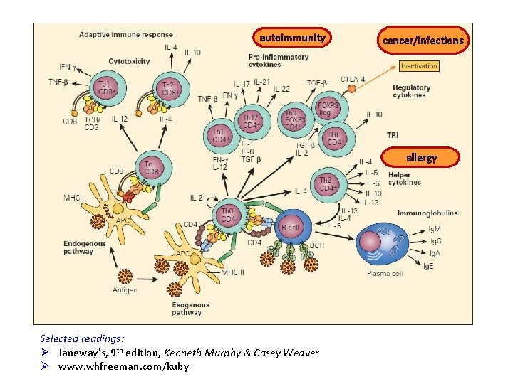 autoimmunity cancer/infections allergy Selected readings: Ø Janeway's, 9 th edition, Kenneth Murphy & Casey