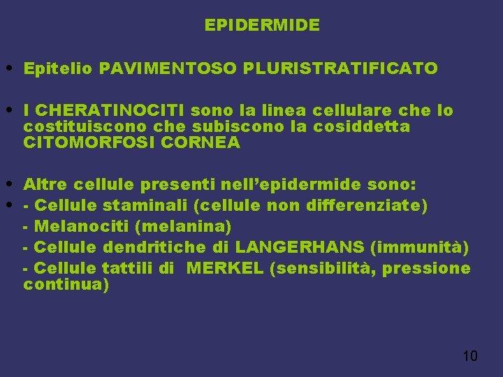 EPIDERMIDE • Epitelio PAVIMENTOSO PLURISTRATIFICATO • I CHERATINOCITI sono la linea cellulare che lo