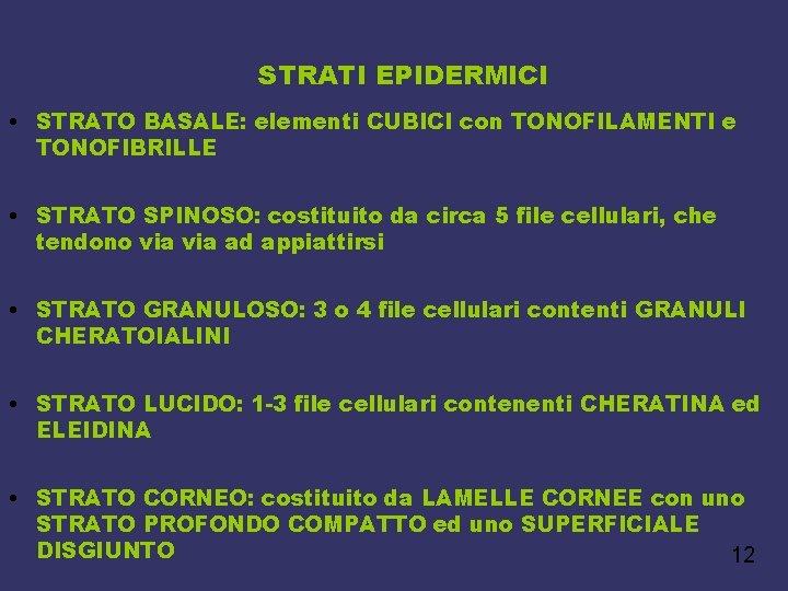 STRATI EPIDERMICI • STRATO BASALE: elementi CUBICI con TONOFILAMENTI e TONOFIBRILLE • STRATO SPINOSO: