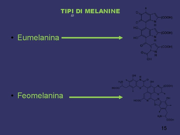 TIPI DI MELANINE • Eumelanina • Feomelanina 15