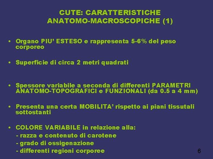 CUTE: CARATTERISTICHE ANATOMO-MACROSCOPICHE (1) • Organo PIU' ESTESO e rappresenta 5 -6% del peso