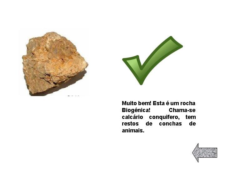 Muito bem! Esta é um rocha Biogénica! Chama-se calcário conquifero, tem restos de conchas