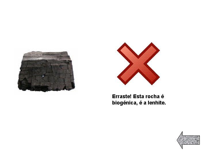 Erraste! Esta rocha é biogénica, é a lenhite.