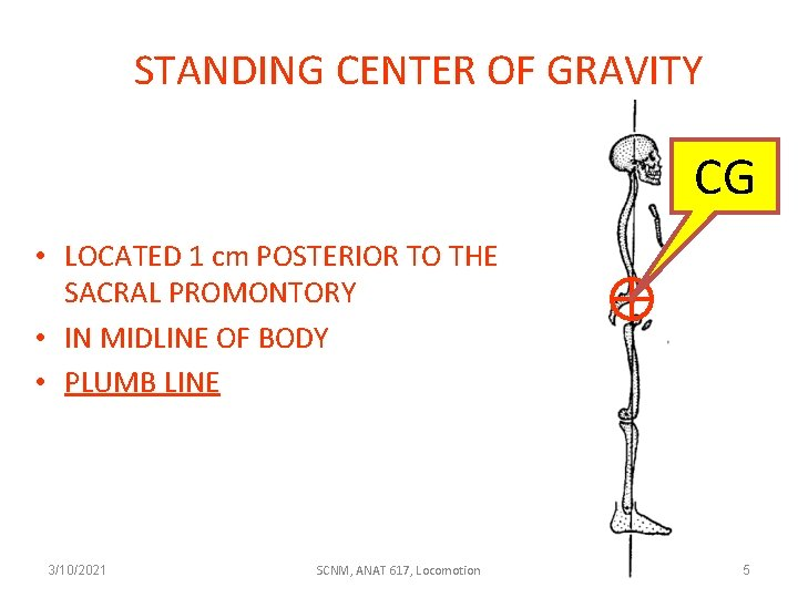 STANDING CENTER OF GRAVITY CG • LOCATED 1 cm POSTERIOR TO THE SACRAL PROMONTORY