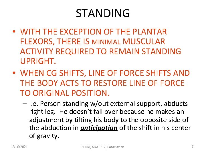 STANDING • WITH THE EXCEPTION OF THE PLANTAR FLEXORS, THERE IS MINIMAL MUSCULAR ACTIVITY