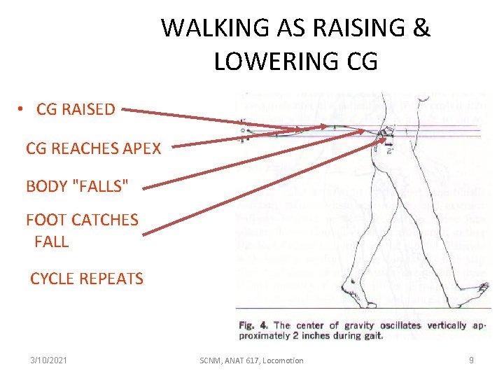"""WALKING AS RAISING & LOWERING CG • CG RAISED CG REACHES APEX BODY """"FALLS"""""""
