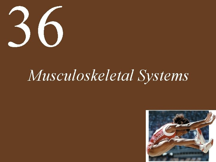 36 Musculoskeletal Systems