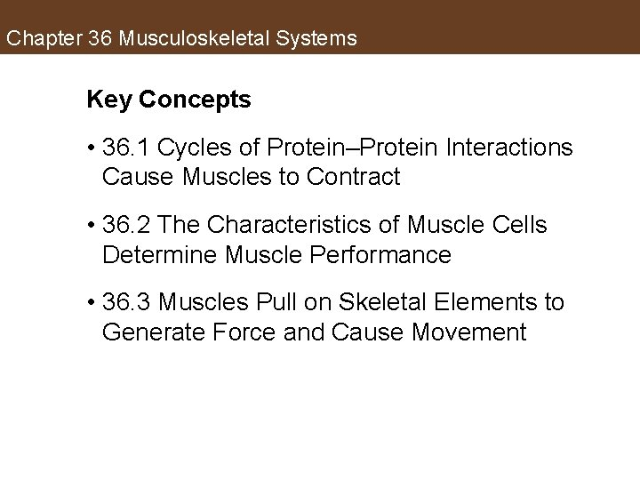 Chapter 36 Musculoskeletal Systems Key Concepts • 36. 1 Cycles of Protein–Protein Interactions Cause