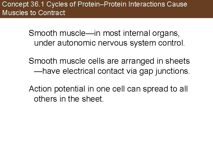 Concept 36. 1 Cycles of Protein–Protein Interactions Cause Muscles to Contract Smooth muscle—in most