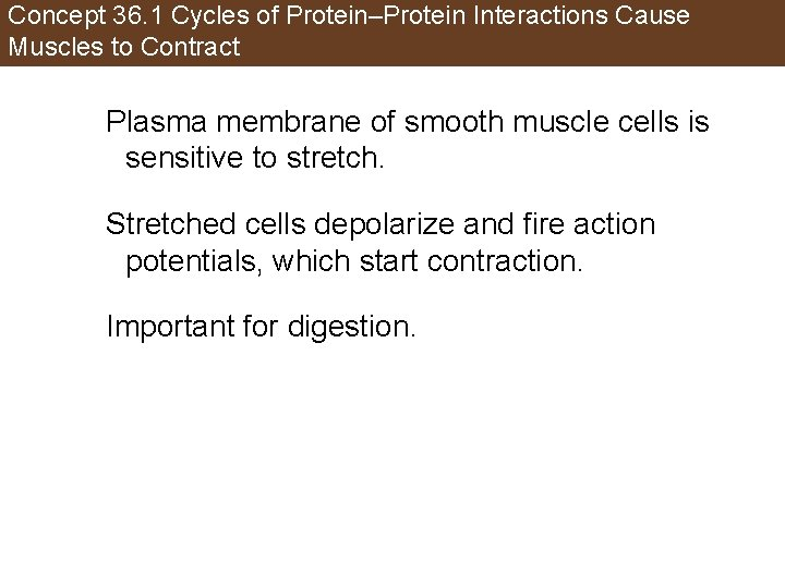 Concept 36. 1 Cycles of Protein–Protein Interactions Cause Muscles to Contract Plasma membrane of