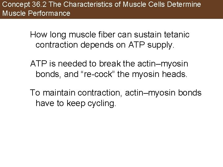 Concept 36. 2 The Characteristics of Muscle Cells Determine Muscle Performance How long muscle
