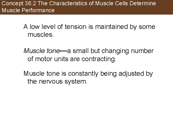 Concept 36. 2 The Characteristics of Muscle Cells Determine Muscle Performance A low level