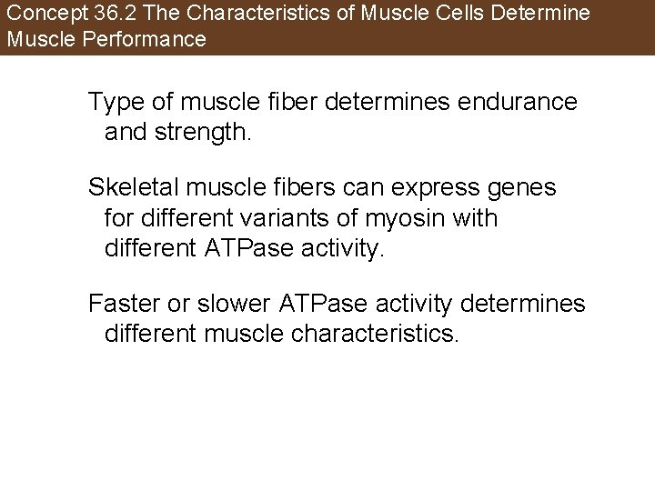 Concept 36. 2 The Characteristics of Muscle Cells Determine Muscle Performance Type of muscle