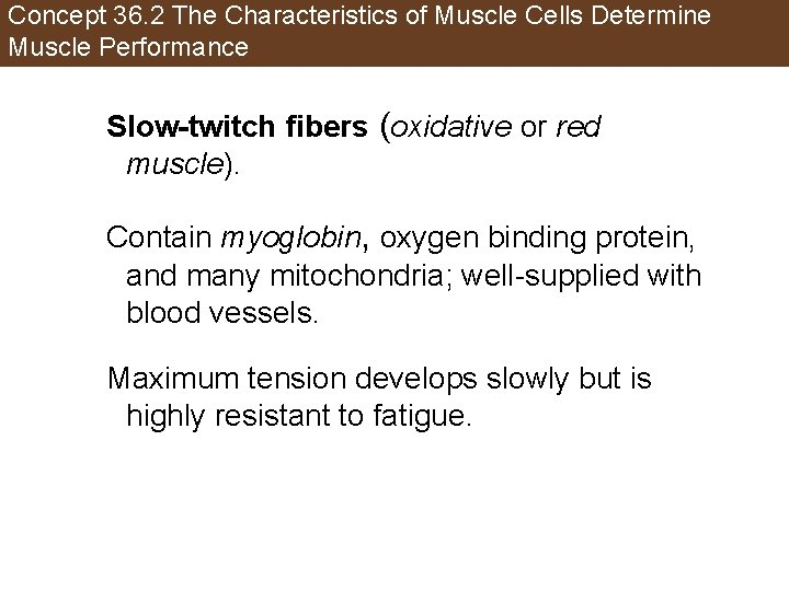 Concept 36. 2 The Characteristics of Muscle Cells Determine Muscle Performance Slow-twitch fibers (oxidative
