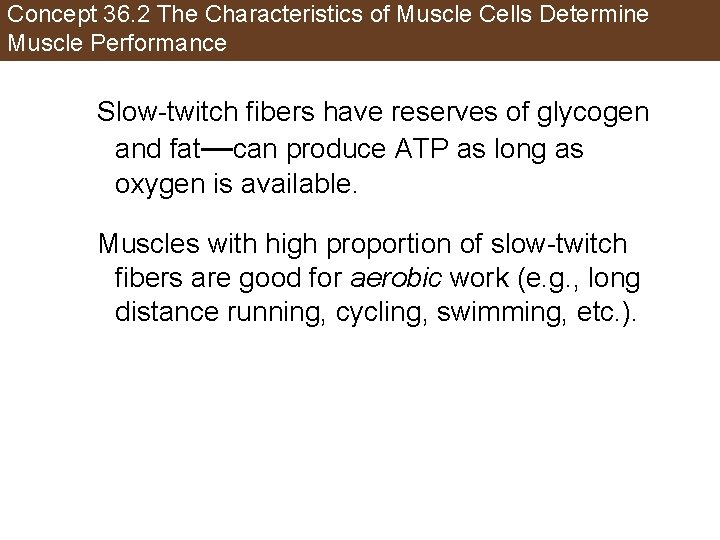Concept 36. 2 The Characteristics of Muscle Cells Determine Muscle Performance Slow-twitch fibers have