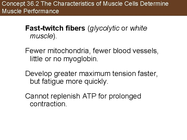 Concept 36. 2 The Characteristics of Muscle Cells Determine Muscle Performance Fast-twitch fibers (glycolytic