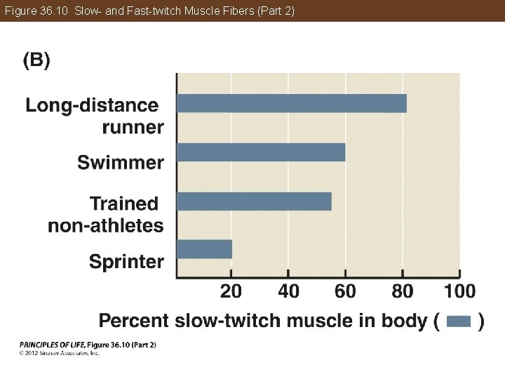 Figure 36. 10 Slow- and Fast-twitch Muscle Fibers (Part 2)