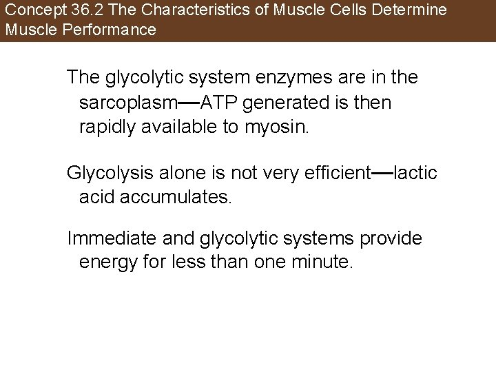 Concept 36. 2 The Characteristics of Muscle Cells Determine Muscle Performance The glycolytic system