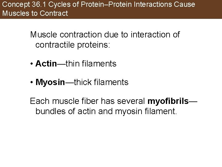 Concept 36. 1 Cycles of Protein–Protein Interactions Cause Muscles to Contract Muscle contraction due