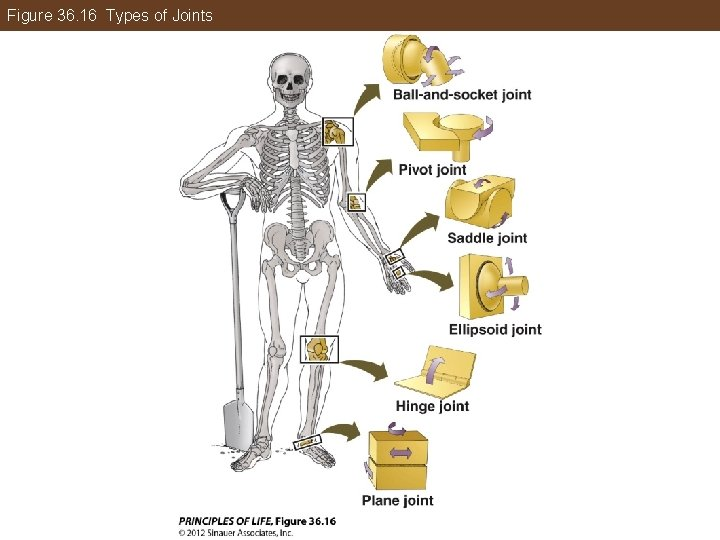 Figure 36. 16 Types of Joints