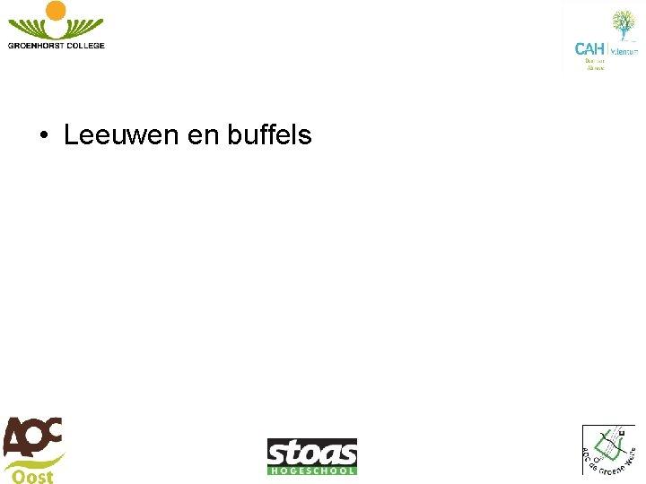 • Leeuwen en buffels
