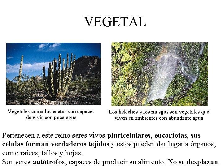 VEGETAL Vegetales como los cactus son capaces de vivir con poca agua Los helechos