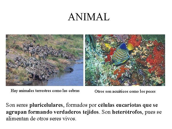 ANIMAL Hay animales terrestres como las cebras Otros son acuáticos como los peces Son