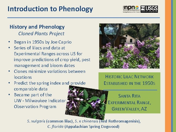 Introduction to Phenology History and Phenology Cloned Plants Project • Began in 1950 s