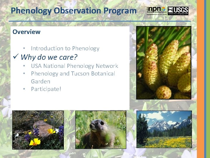 Phenology Observation Program Overview • Introduction to Phenology ü Why do we care? •