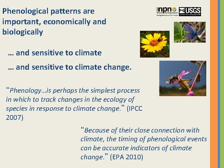 """Phenological patterns are important, economically and biologically … and sensitive to climate change. """"Phenology…is"""