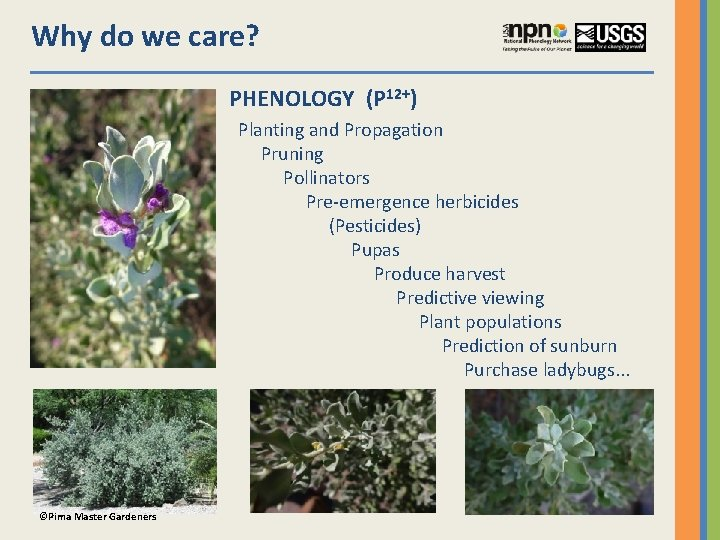 Why do we care? PHENOLOGY (P 12+) Planting and Propagation Pruning Pollinators Pre-emergence herbicides