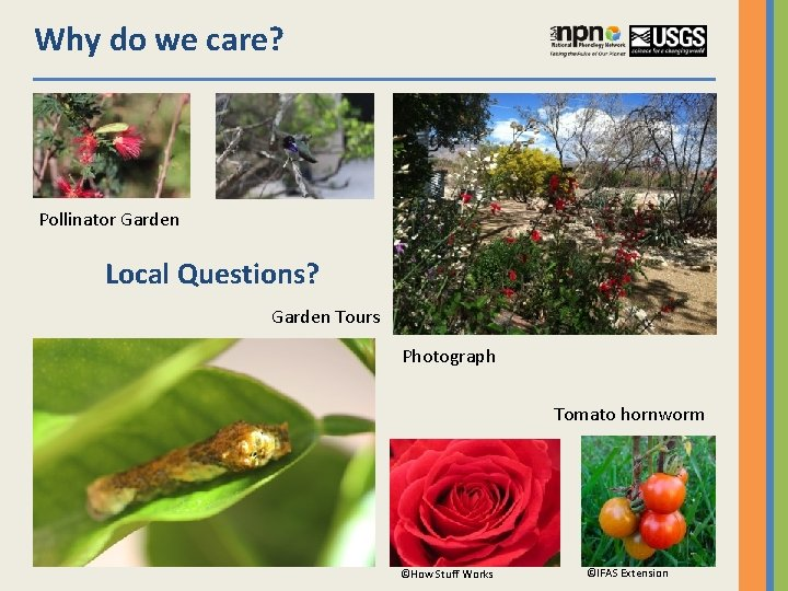 Why do we care? Pollinator Garden Local Questions? Garden Tours Photograph Tomato hornworm ©How