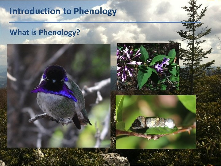 Introduction to Phenology What is Phenology?